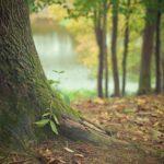 Śliczny i {zadbany ogród to nie lada wyzwanie, w szczególności jak jego pielęgnacją zajmujemy się sami.